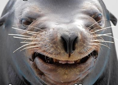 "Seriously, why is this the best result for ""dorky seal"" image search?"